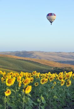 Some day a hot air balloon ride and maybe a beautiful sunflower field to go with it. Beautiful Hot air balloon ride over Tuscany, Val Dorcia Siena, Italy Toscana, Asa Delta, Air Balloon Rides, Hot Air Balloons, Flying Balloon, Air Ballon, Beautiful Places, Scenery, Places To Visit