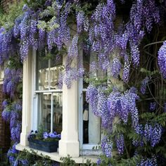 Beautiful entry with wisteria