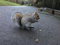 I'm terribly busy avoiding doing my tax return so here's a phone snap of one of several new friends I made today. They ate out my hand and a couple of them tried to follow me home. I'd happily let them move in :) #squirrel #procrastination #awalkinthepark #iphone6s #drdoolittle