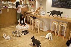 People Can Grab a Coffee With Cats at Cat Cafes [Video]