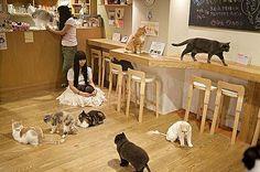 Café katten