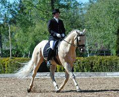 quarter horse dressage