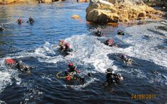 Scuba Dive Cape with Alpha Dive Centre Dive Shops and School. Take your scuba diving gear, swim with seals in the Atlantic or explore wrecks in False Bay. Dive Shop, Scuba Diving Gear, Cape Town, Underwater, Waves, Swimming, Ocean, Events, Explore