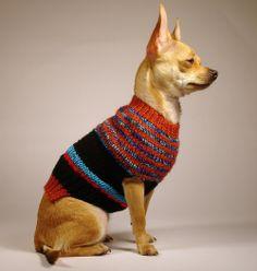 POLARIZACION  luxury brand la bamba dog sweater