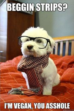 Hipster dog, haha!