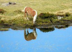 """""""specchio... specchio..."""" una #twitpic dalle Dolomiti di Mimmetta #italia"""