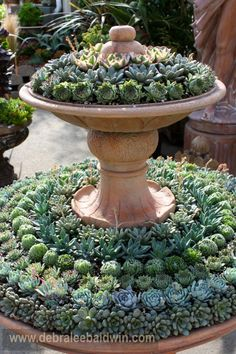 Small rosette succulents (echeverias and sempervivums) are striking when used in a geometric arrangement. Design by Cordova Gardens nursery, Encinitas, CA. Share if you like! pinned with Pinvolve - pinvolve.co