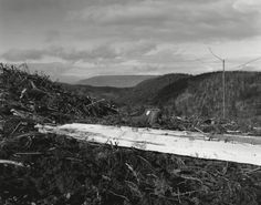 Robert Adams Near Clatskanie, Columbia County, Oregon, Series: Turning Back