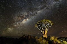 Credit: Marsel van Oosten  Marsel van Oosten, Netherlands, winner – wild planet portfolio. Quiver tree, Namib desert, Namib...