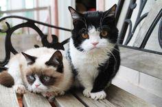 Grumpy Cat & her brother Pokey!
