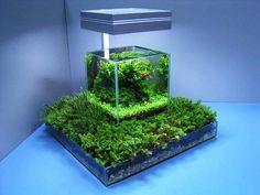 Aquascape within a terrarium
