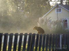 Louie Schwartzberg Dog Days of Summer