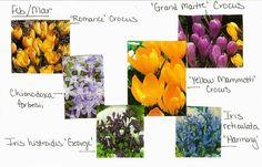 VW Garden: Planning for Spring Bulb Bloom Progression at Spokane Temple