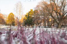 St. Hanshaugen8   Bymiljøetaten   Flickr
