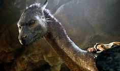 Here be dragons: the most noble of literary beasts | Books ...