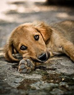 ❤ all animals. Animals And Pets, Baby Animals, Funny Animals, Cute Animals, Puppies And Kitties, Cute Puppies, Cute Dogs, Mundo Animal, My Animal