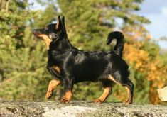 Dogs Breeds - Thinking On Getting A Dog? Read These Tips! -- Check out the image by visiting the link. #DogsBreeds