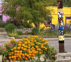 Corry Street Yellows