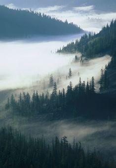 "Morning fog White Pass in the ""Washington Cascades"".."