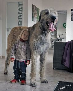 30 Big Dogs Livin& Large With Awesome Names [PICTURES Are you getting a big dog and searching for that perfect name? Here are 30 big dogs with pretty fantastic names to inspire you in your search. Huge Dogs, Giant Dogs, I Love Dogs, Dogs And Kids, Animals For Kids, Cute Animals, Perro Leonberger, Le Plus Grand Chien, Pet Dogs