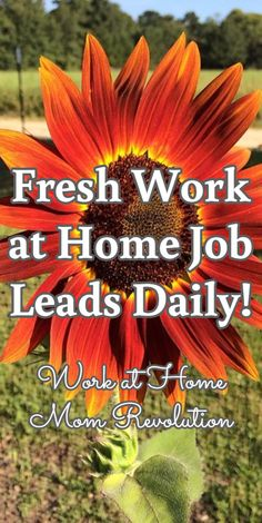 Want great ideas on working from home? Head to this fantastic info!