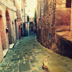 One of the cat of #viabenincasa, #perugia