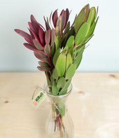 It Works, Illustration, Flowers, Plants, Illustrations, Florals, Plant, Flower, Bloemen