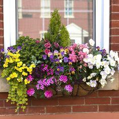 best summer flowers on balcony – Vyhľadávanie Google Window Box Flowers, Window Boxes, Flower Boxes, Container Flowers, Summer Flowers, Flower Arrangements, Planters, Windows, Landscape