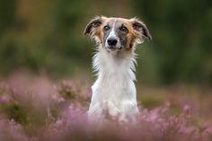 Magical Runner Cosmic Love – Hundefotografie Ingolstadt