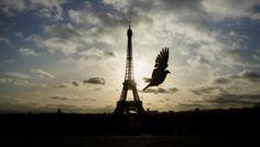 Column: Na Parijs is 'vrijheid' het enige juiste Woord van het Jaar | Ik hou van taal | De Morgen