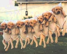 ♥ Humour Animaux ♥ ( Humour Chien - Chiot )
