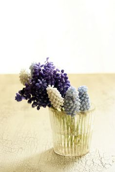 Muscari by mellow_stuff, via Flickr