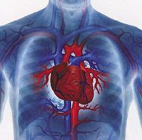 Heart Disease: The number one killer in America. Are you at risk?  #Heartdisease #risk
