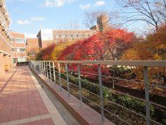 - South Korea  Duksung Woman's University    Season Fall    So beautiful