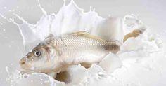 Balık ve Yoğurt Neden Birlikte Yenmez?