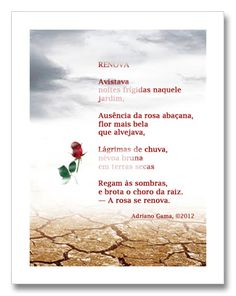 A rosa se renova