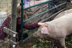 The University of Montana just killed three more pigs—make them the last to die!