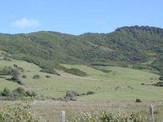 Camino  Pinguineras. Ancud Chile, Mountains, Nature, Travel, Drive Way, Viajes, Chili Powder, Traveling, Chilis
