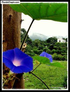 Verdes campos vistos desde el camino de Cachil hacia San Nicolas, Baja Verapaz, Guatemala