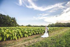 NC southern wedding // tobacco field — richard barlow photography | Raleigh, North Carolina + International Wedding, Portrait, and Commercial Photographer