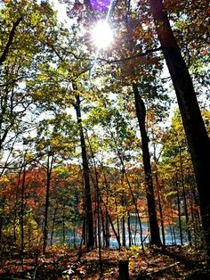 #Nature and a beautiful autumn day helps rejuvenate the soul.