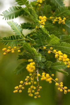 Top ten winter-blooming plants for Pacific Northwest gardens | OregonLive.com