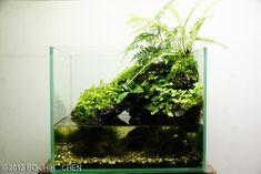 2012 AGA Aquascaping Contest - Entry #87