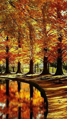 The post (notitle) autumn scenery appeared first on Trendy. Foto Picture, Beautiful Places, Beautiful Pictures, Amazing Places, Autumn Scenes, Fall Pictures, Belle Photo, Beautiful Landscapes, Autumn Leaves