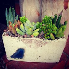 succulents in DIY cement containers