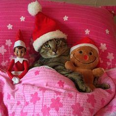 Santa baby❤❤