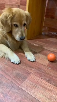 Super Cute Puppies, Baby Animals Super Cute, Cute Baby Dogs, Cute Funny Dogs, Cute Little Animals, Cute Funny Animals, Cute Animal Videos, Cute Animal Pictures, Funny Animal Jokes