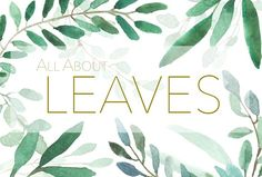 All About Leaves - Watercolor  by MariePierLaf on @creativemarket