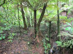 Kepa Bush, Mission Bay, Auckland, New Zealand Mission Bay, Flora And Fauna, Auckland, New Zealand, Walking, Plants, Walks, Plant, Hiking