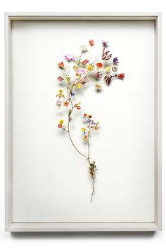 Anne Ten Donkelaar - Flower scape